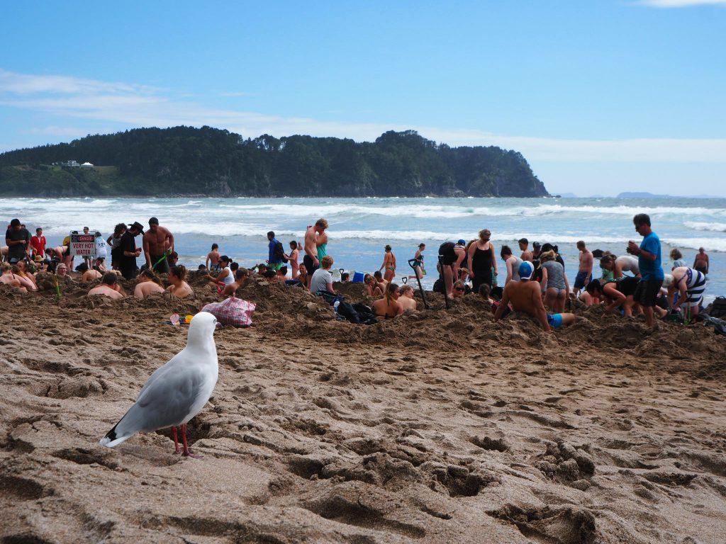 Hot Water Beach. New Zealand.